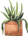 potted_0005_6.png