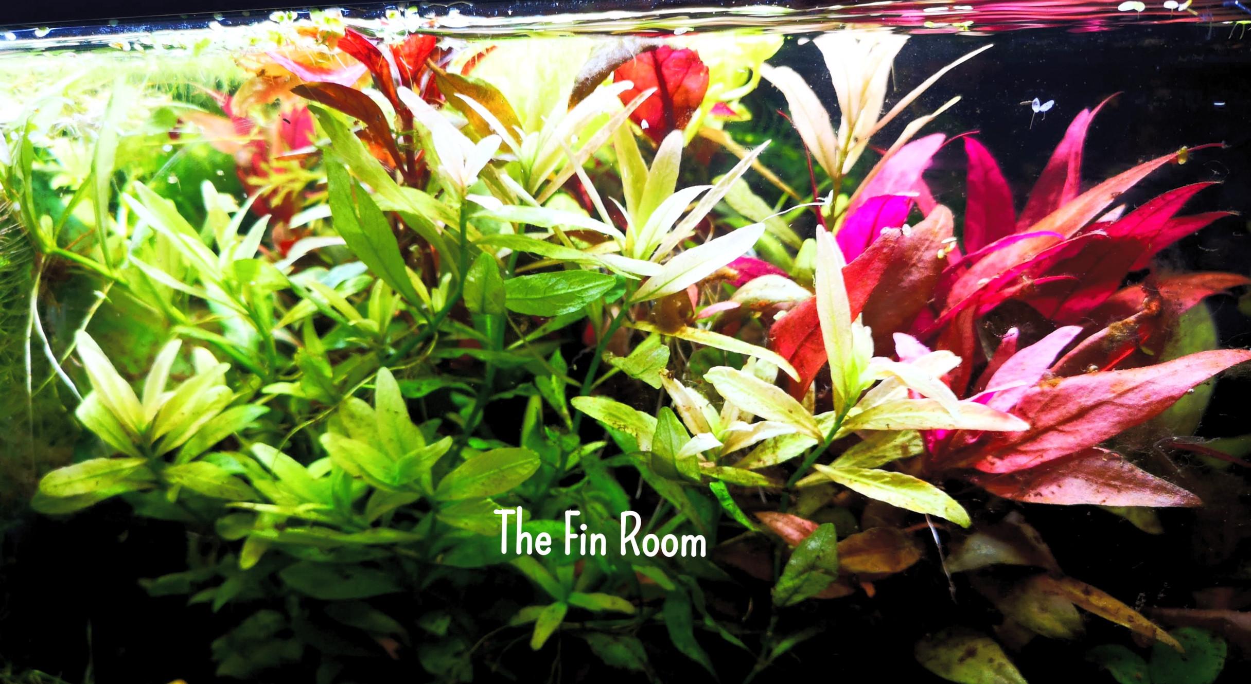 www.thefinroom.co.uk