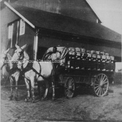 Pre-1930, peaches going to market.jpg