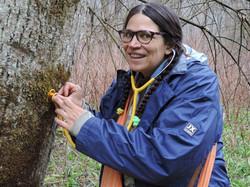 Auscultation des arbres (3)