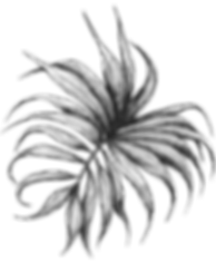 Palm3.png