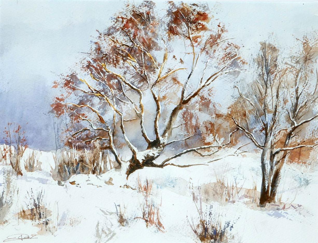 Bouleau en hiver.jpg