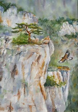 Aigle juvénile et pin solitaire