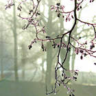 Branche glacée