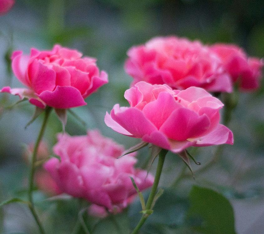 fleursjardinso-4803_edited.jpg
