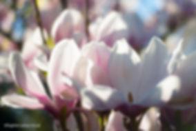 fleursjardinso-4267.jpg