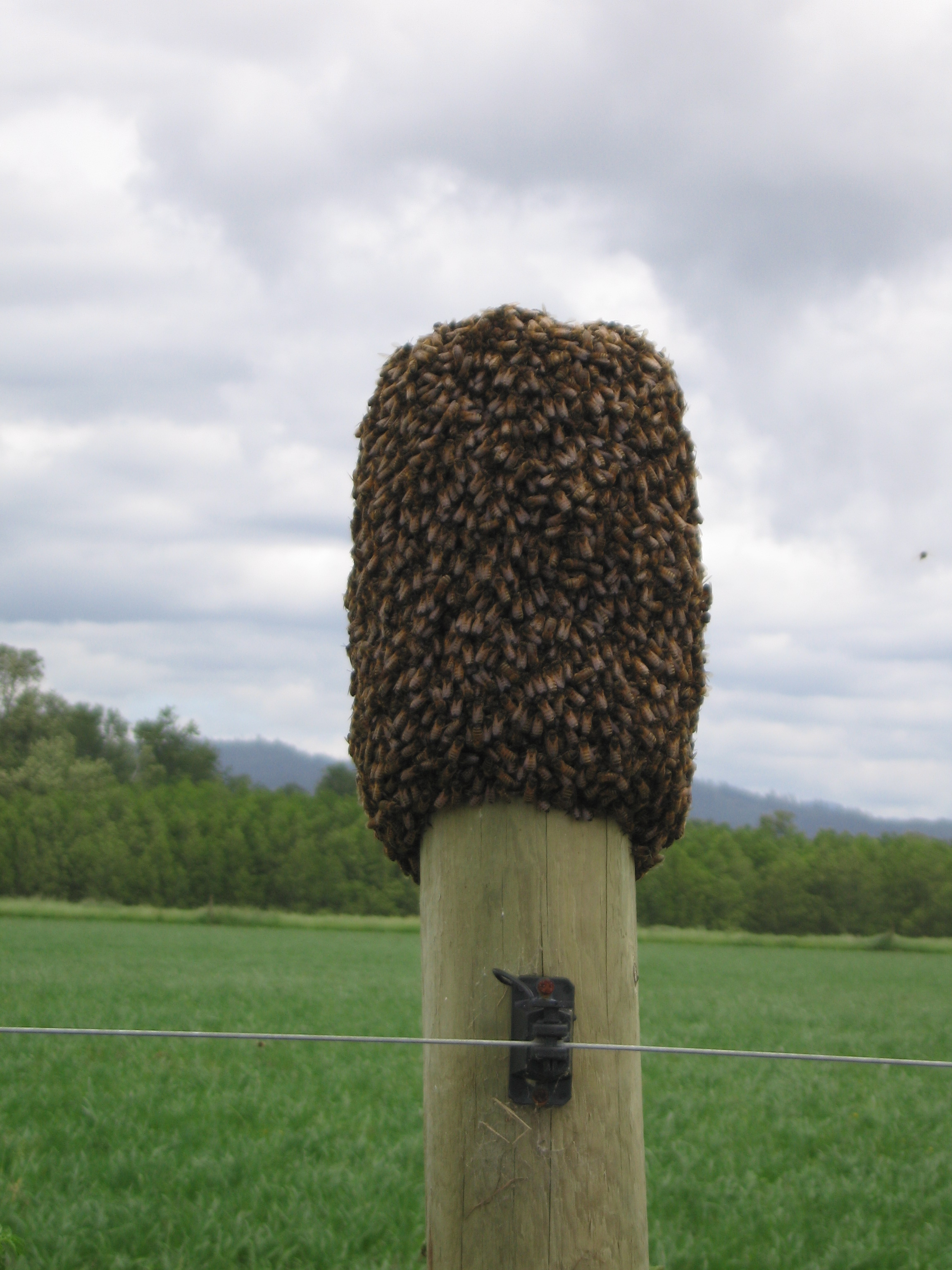 Bees on post_0003