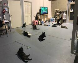 CAT TV