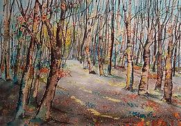Winter sun,silver birches.jpg
