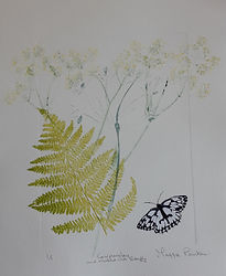 Cowparsley and Marbled White Butterfly.j