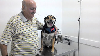 Clinica veterinária
