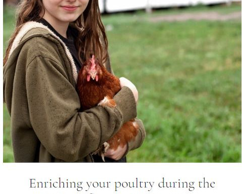 Enriching your poultry during the Avian Influenza housing order recording
