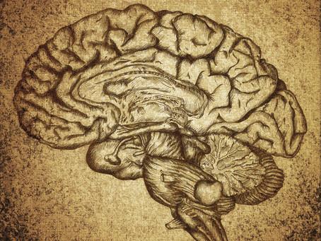 Brain Health: It Starts Here