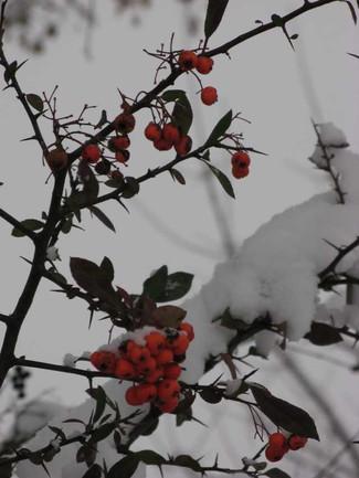 SchneeInStuttgartDez08_Beeren.JPG