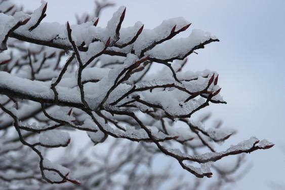 IMG_6811_schneebedeckt.jpg