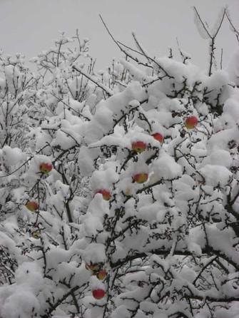 SchneeInStuttgartDez08_Schneeaepfel.JPG