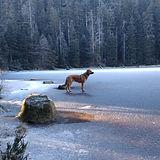 Benni am Wildsee.jpg