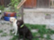 neue Bilder (12)_edited.jpg