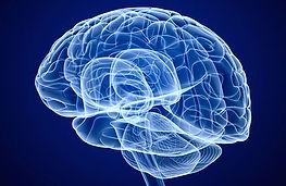 cerveau-2.jpg
