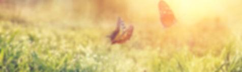 © Thaut Images / Fotolia.com