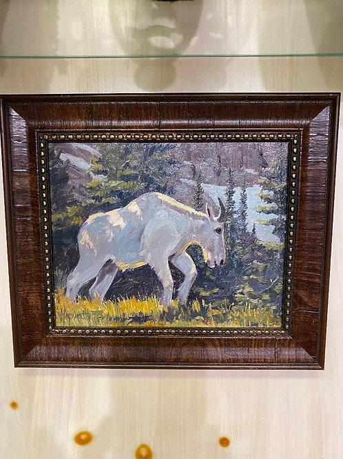 Walking Rocky Mountain Goat