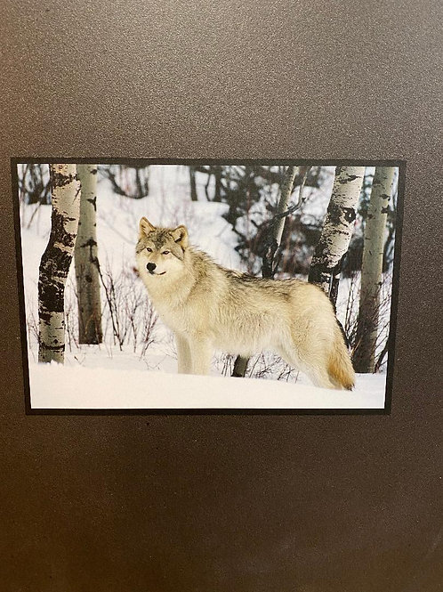 Natural Slate Picture Gray Wolf