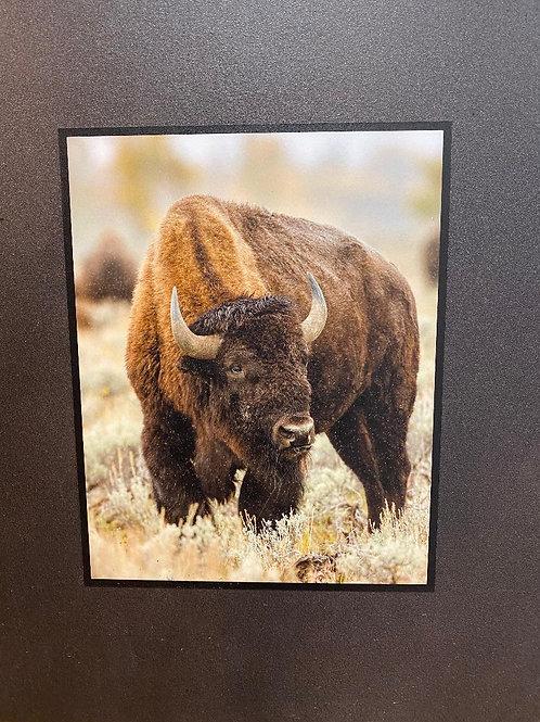 Natural Slate Picture Grazing Buffalo