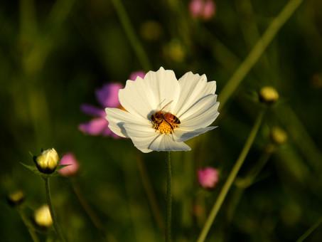 1BillionBees, l'ONG qui veut sauver les abeilles !