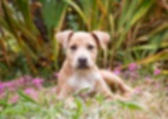 Ivy - Dog Photography