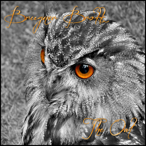 INSTANT DOWNLOAD The Owl project: find your spiritual guide