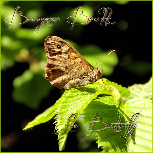 INSTANT DOWNLOAD The Butterfly project: find your spiritual guide