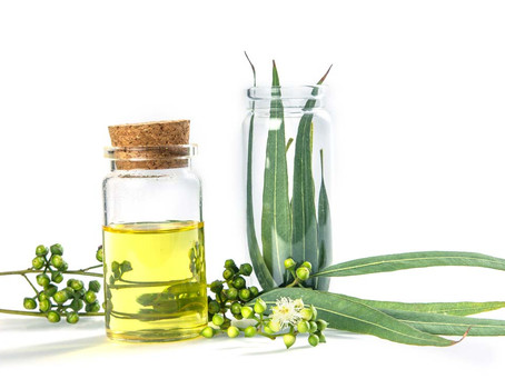 Eucalyptus Oil - Good For You (And Your Home)