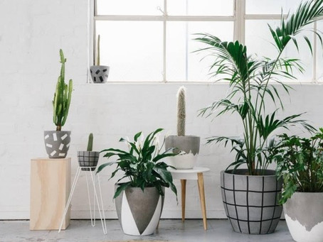 8 Indoor Plants To Clean Your Air
