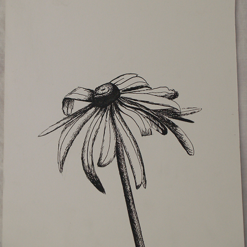 Inkpen Studies for Illustrator: Black-eyed Susan