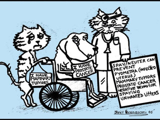 The Spay and Neuter Chronicals