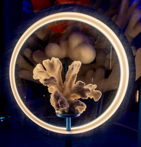 lille3000 - Textidream - Capsule Aquatic © Aaron Castillo 4.jpg