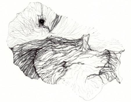 corail-origine-etude-3-©jeremy-gobe_optimized.jpg