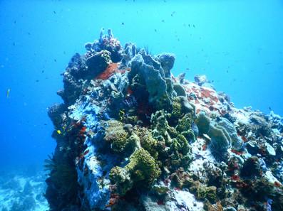 monde-aquatique-plongée.jpg