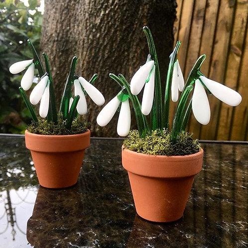 Snowdrop Pots