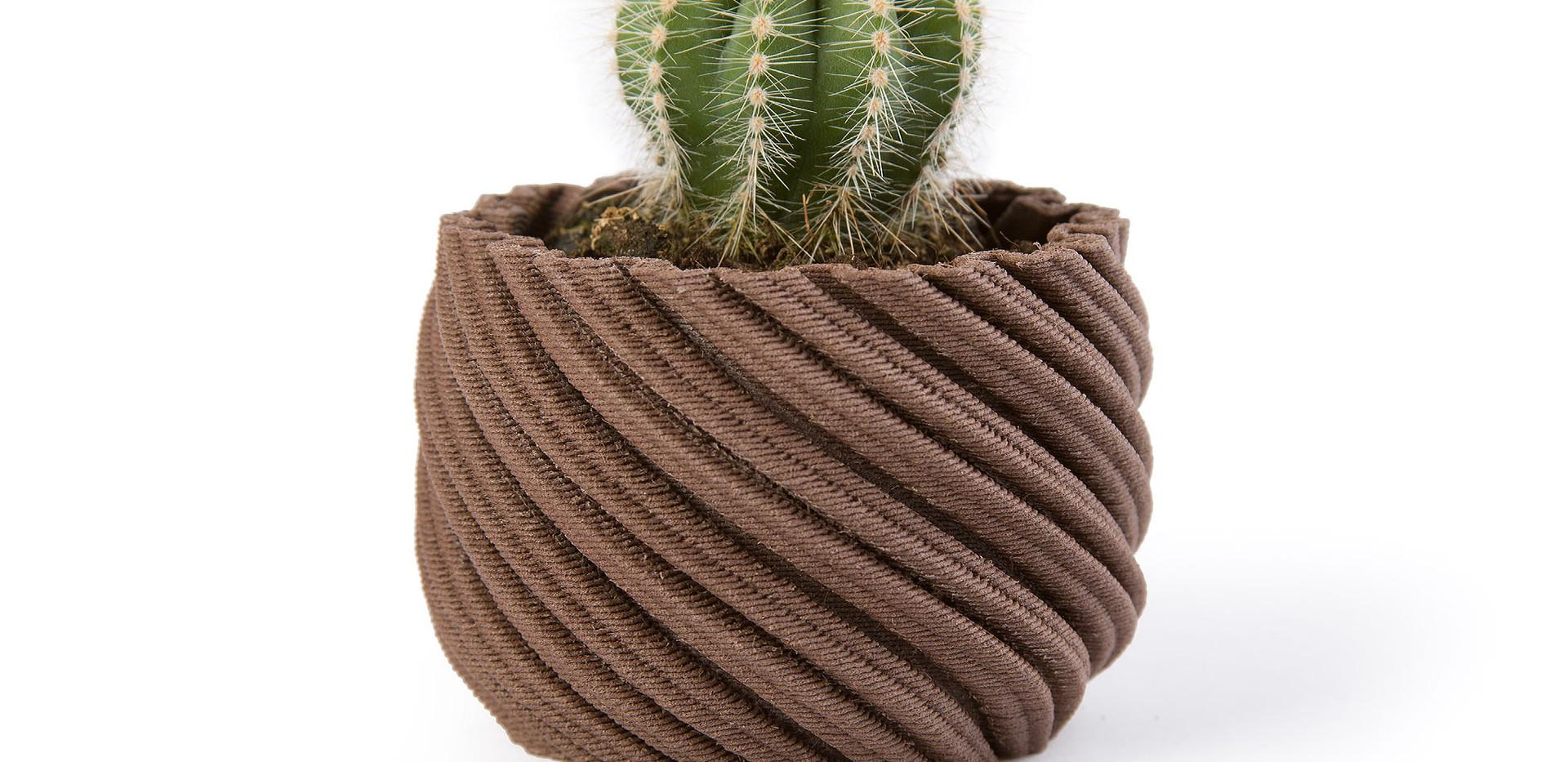 Cactus Rosewood
