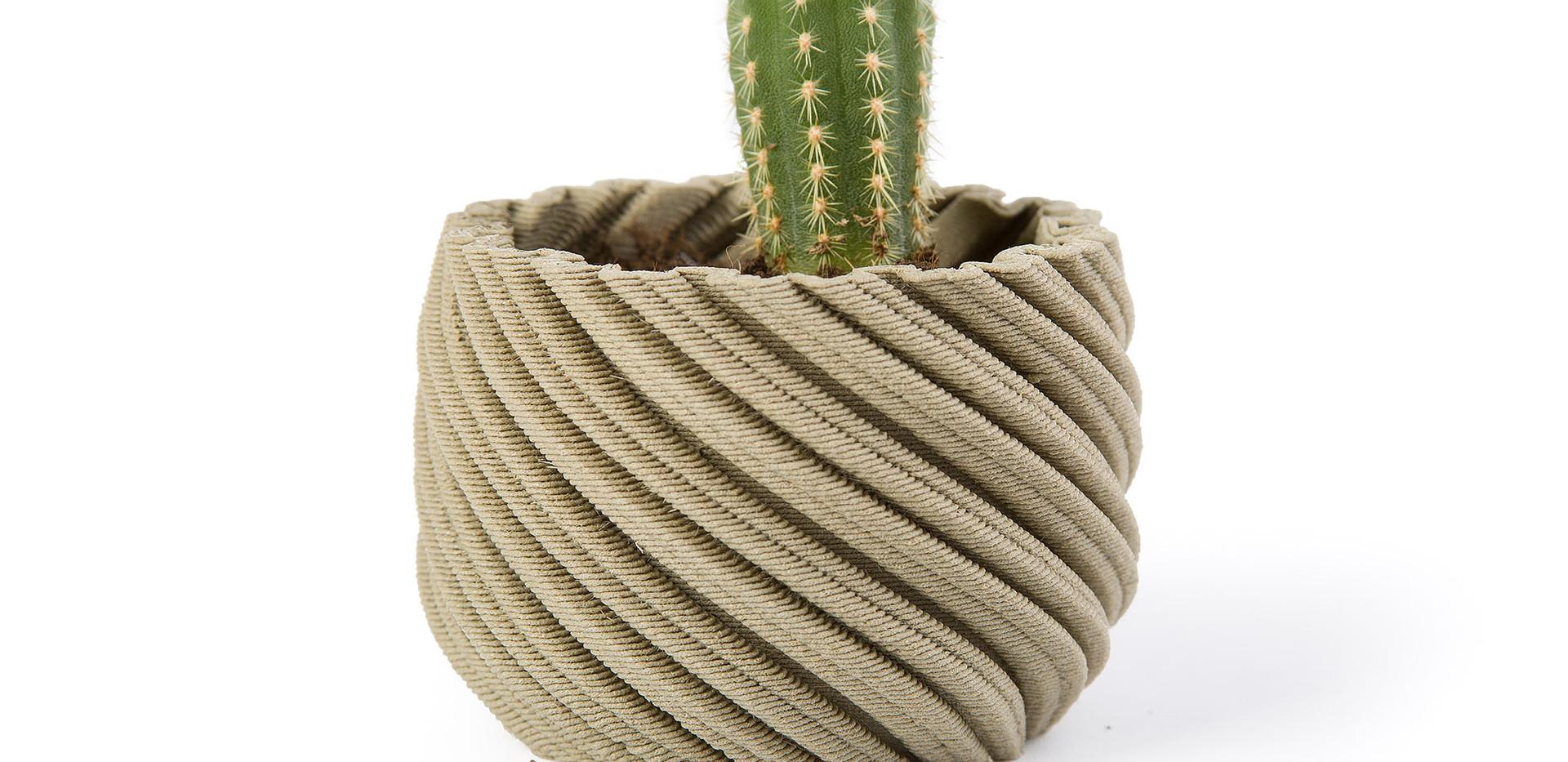 Cactus Champagne