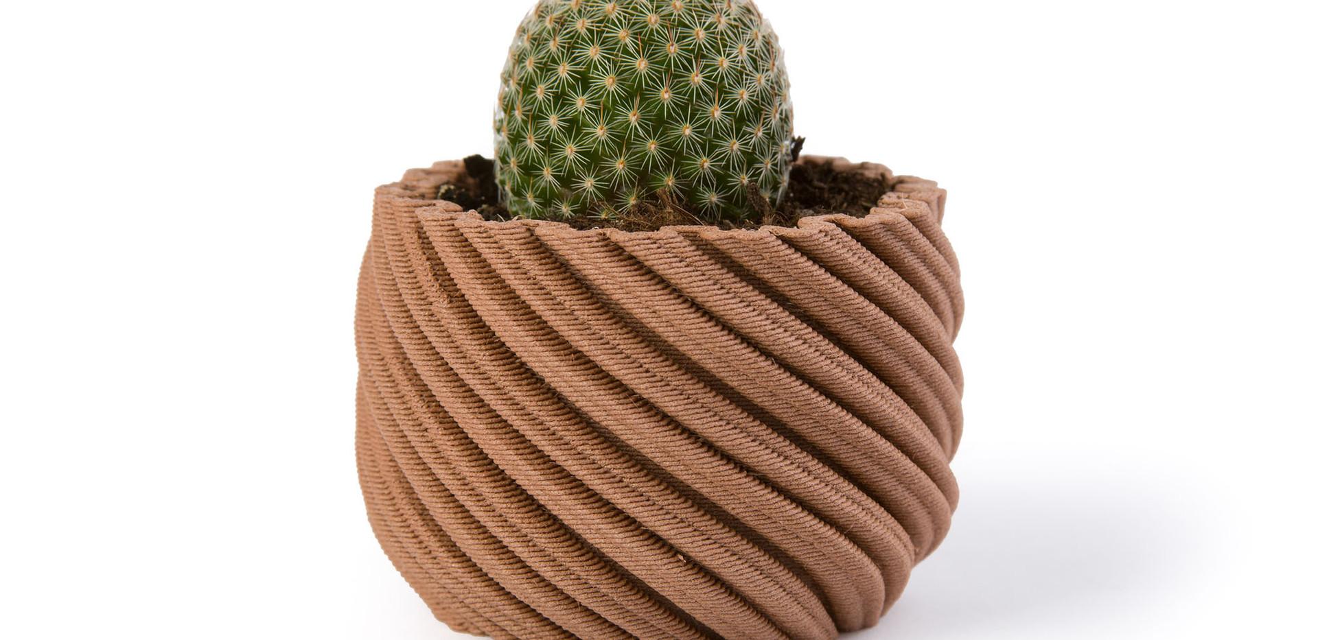 Cactus Cinnamon