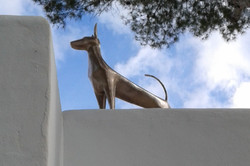 Podenco on the roof