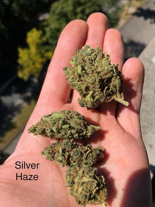 Silver Haze, Indoor, <0.2% thc, 1kg