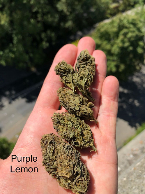 Purple Lemon, Glashouse, <0.2% thc, 1kg