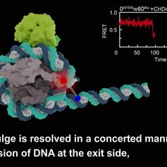 Nucleosome Remodeler