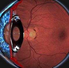 Eye Anatomy Cross-section