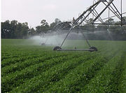 Sprinkler system watering crops