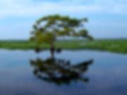 Tree Edited.jpg