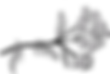 Yarrow%20Illustration%20Black%20and%20Wh